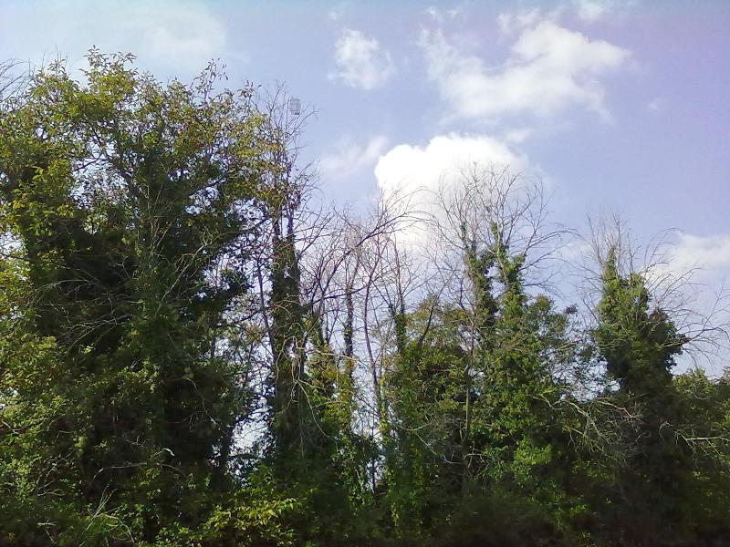 cage-appelant-cimeau-grandet-2011-10.jpg