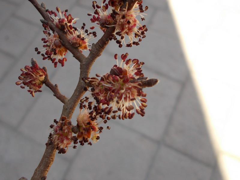 fleurs-arbre-abeille-1.JPG