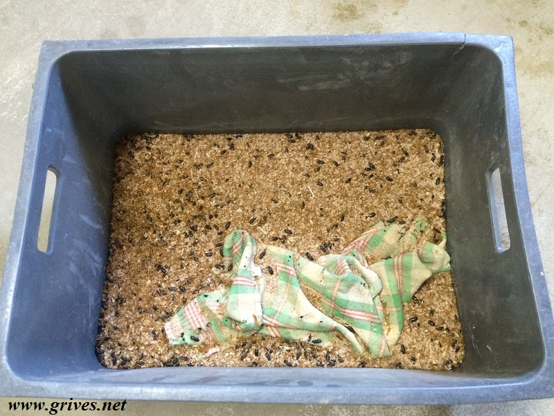 Ver de farine dans la caisse